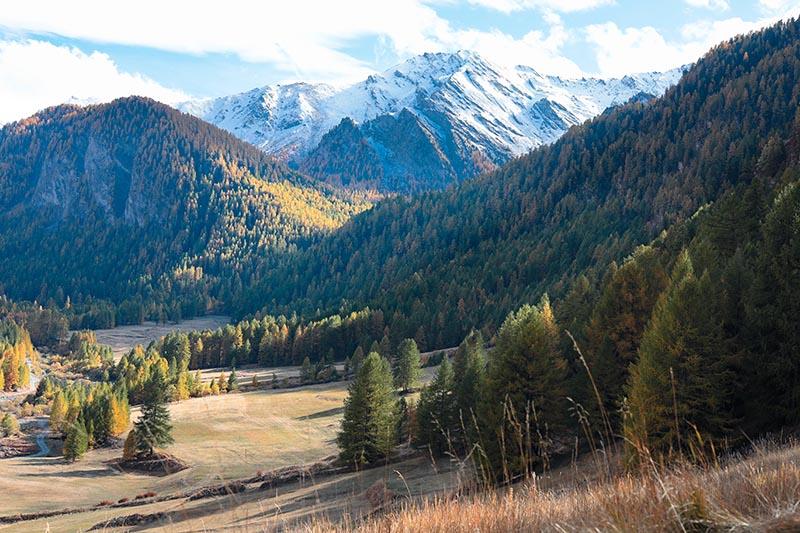 Photographie Paysage Primitive foret et montagne