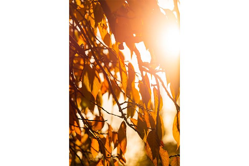Photographie minimaliste Contre jour automne