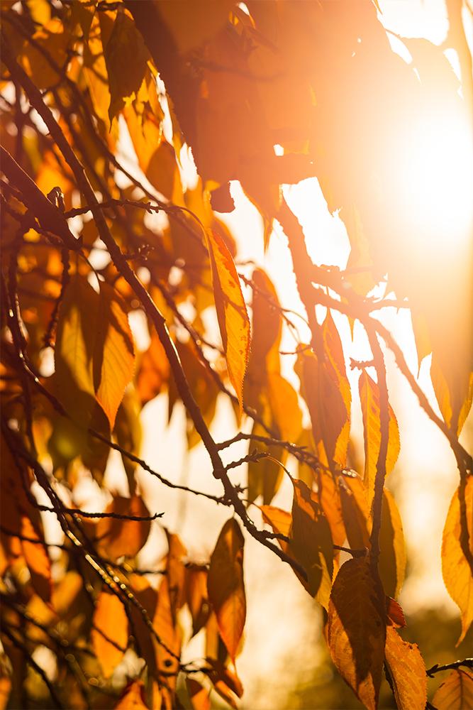 Photographie minimaliste de feuilles d'automne prises à contre-jour
