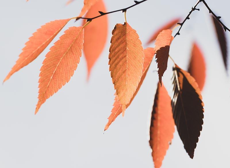 Photographie minimaliste Les feuilles d'un arbre en automne