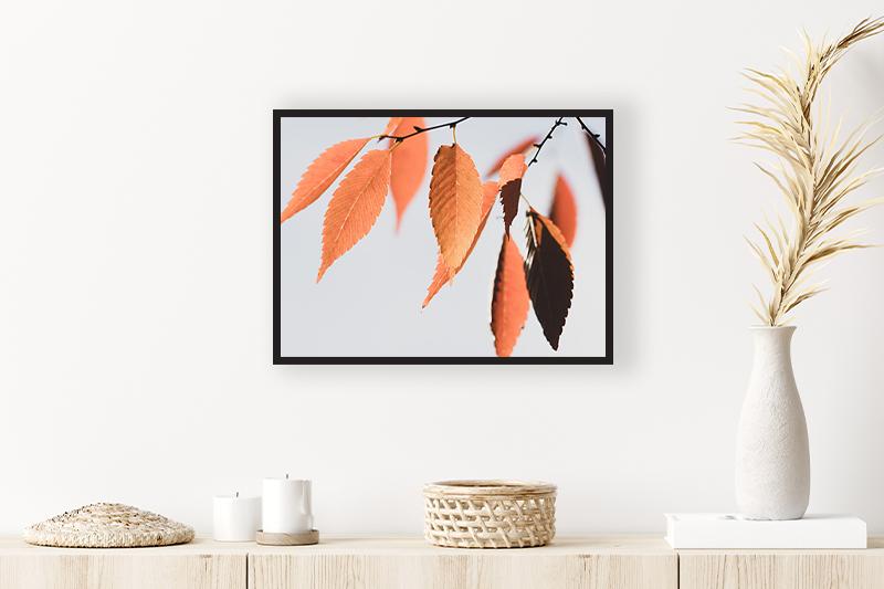 T1 feuilles d'automne Mise en scène GUILLOT IMAGES Galerie en ligne photographie d'art