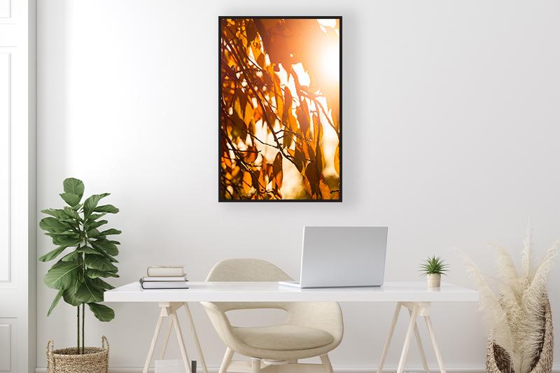 Photographie minimaliste Contre jour automne mise en scène